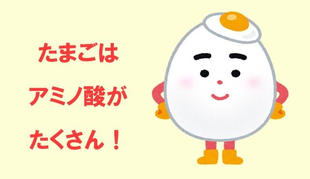 卵黄はアミノ酸が豊富