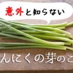 にんにくの芽の基礎知識!栄養成分や旬の時期、レシピから保存方法まで